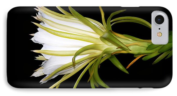 Profile Night Blooming Cereus IPhone Case by Barbara Chichester