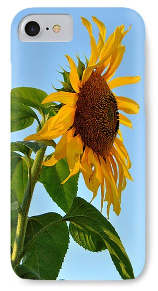 Profile Of A Sunflower IPhone Case by Kathleen Sartoris