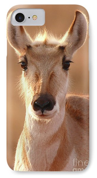 IPhone Case featuring the photograph Pronghorn Antelope Doe In Soft Light by Max Allen