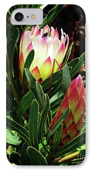 Protea Flower 3 Phone Case by Xueling Zou