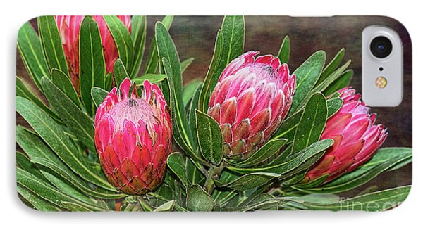 IPhone Case featuring the photograph Proteas In Bloom By Kaye Menner by Kaye Menner