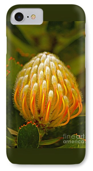 Proteas Ready To Blossom  IPhone Case by Michael Cinnamond