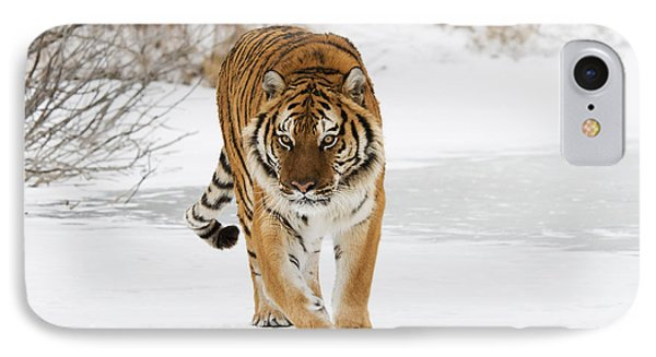 Prowling Tiger IPhone Case