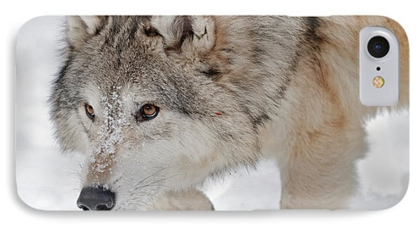 Prowling Wolf IPhone Case
