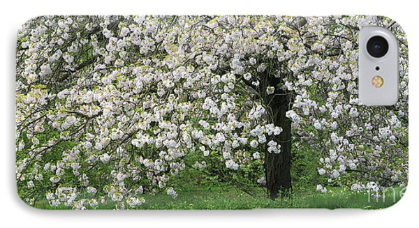 Prunus Choshu Hizakura  IPhone Case by Tim Gainey