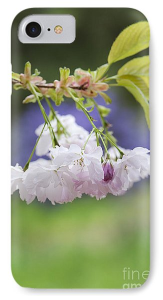 Prunus Shujaku Blossom IPhone Case by Tim Gainey
