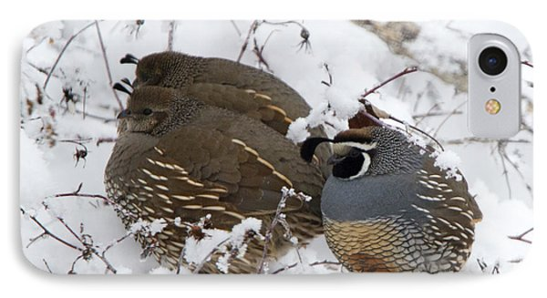 Puffed Winter Quail Family IPhone Case by Mike Dawson