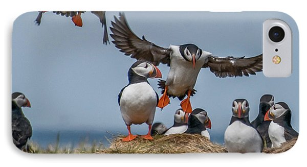 Puffins IPhone Case by Brian Tarr