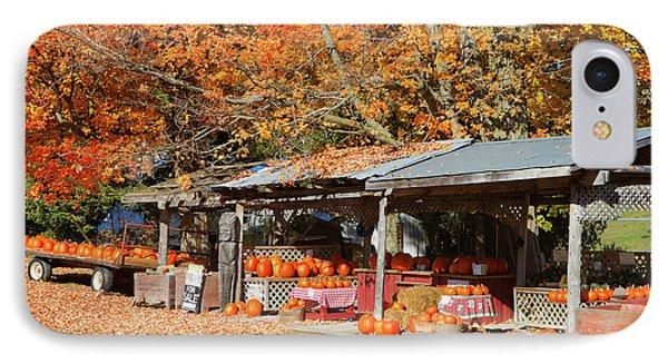 Pumpkins For Sale Phone Case by Louise Heusinkveld