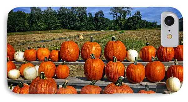 Pumpkins In A Row IPhone Case by Dee Flouton