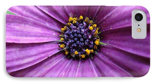 Purple African Daisy IPhone Case