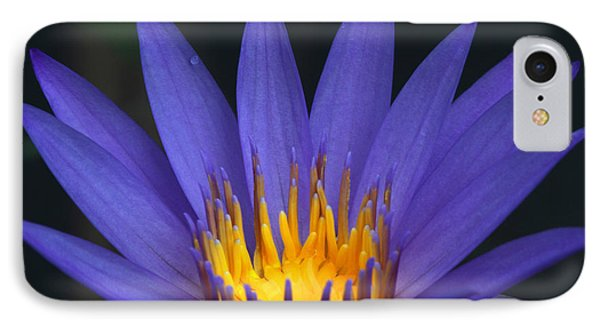 Purple And Yellow Water Lily Phone Case by Sabrina L Ryan