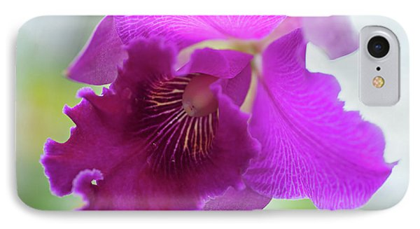 Purple Cattleya Orchid Macro IPhone Case by Jenny Rainbow