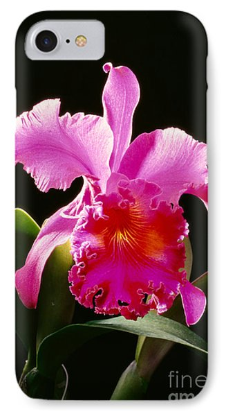 Purple Cattleya Phone Case by Tomas del Amo - Printscapes