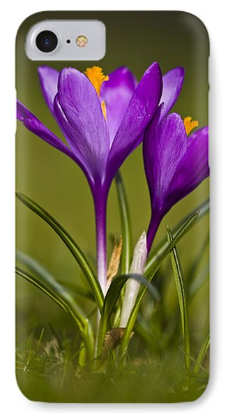 Purple Crocus IPhone Case by Gabor Pozsgai