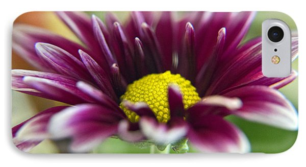 Purple Daisy IPhone Case by Kelly Holm