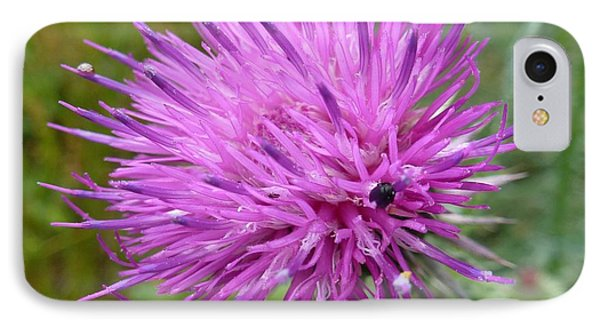 Purple Dandelions 2 IPhone Case by Jean Bernard Roussilhe