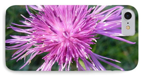 Purple Dandelions 3 Phone Case by Jean Bernard Roussilhe