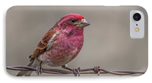 IPhone Case featuring the photograph Purple Finch On Barbwire by Paul Freidlund