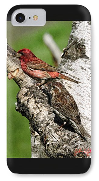 Purple Finches IPhone Case by John Selmer Sr