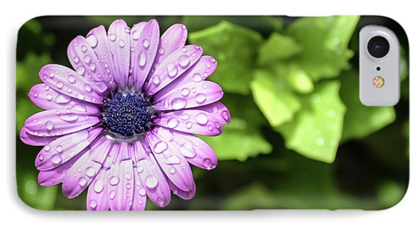 Purple Flower On Green IPhone Case
