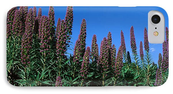 Purple Flowers, Taft Gardens, Ojai IPhone Case