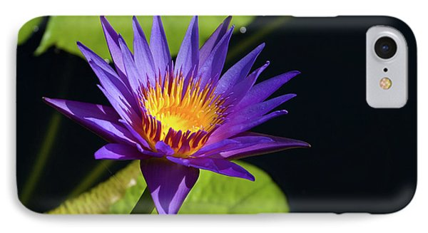 IPhone Case featuring the photograph Purple Gold by Steve Stuller