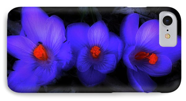 Beautiful Blue Purple Spring Crocus Blooms IPhone Case by Shelley Neff