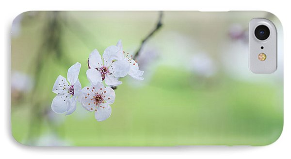 Purple Leaved Cherry Plum Blossom IPhone Case by Tim Gainey