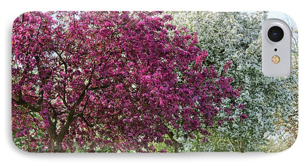 Purple Leaved Crab Apple Blossom In Spring IPhone Case by Tim Gainey