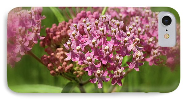 IPhone Case featuring the photograph Purple Milkweed by Scott Kingery