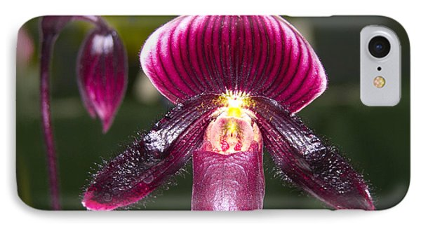 Purple Orchid IPhone Case by Ann Tracy