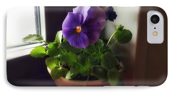 Purple Pansy On My Windowsill IPhone Case by Patricia E Sundik