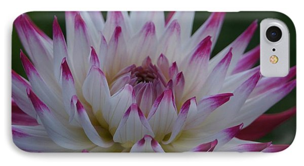 Purple Tipped Starburst Dahlia IPhone Case by Patricia Strand