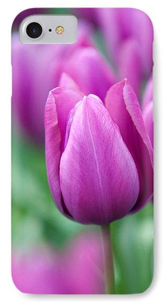 Purple Tulips Of Keukenhof IPhone Case by Jenny Rainbow