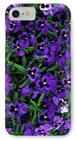 Purple Viola Flowers IPhone Case by Sally Weigand