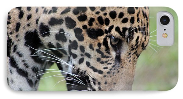 Jaguar And Toy IPhone Case