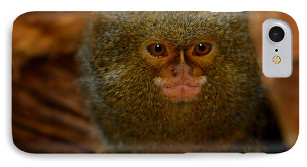 Pygmy Marmoset IPhone Case by Anthony Jones