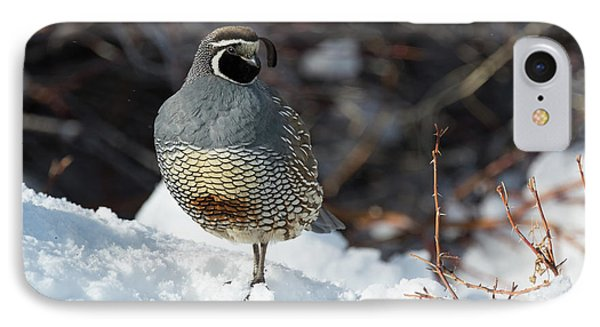 Quail Hollow IPhone Case by Scott Warner