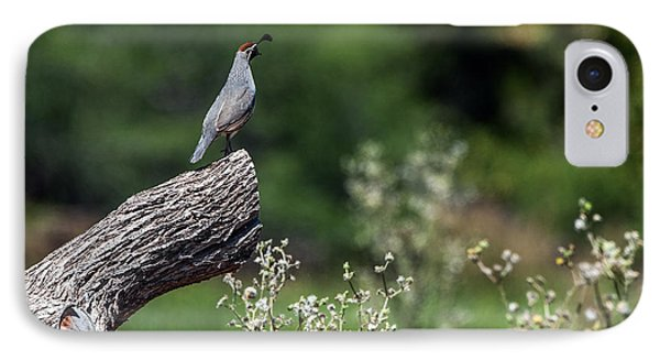 Quail Watching IPhone Case by Tam Ryan