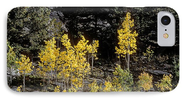 Aspens In Fall At Eleven Mile Canyon, Colorado IPhone Case by John Brink