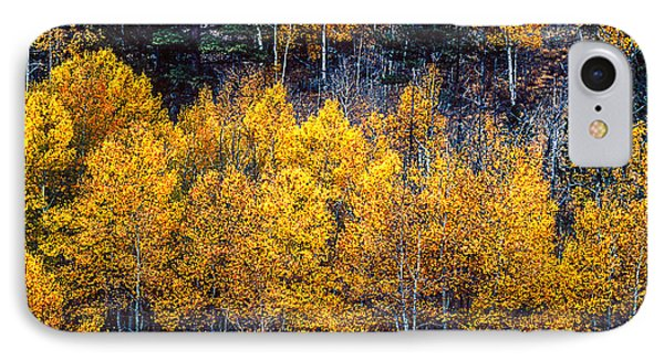 Aspen In Fall Colors In Eleven Mile Canyon Colorado IPhone Case by John Brink