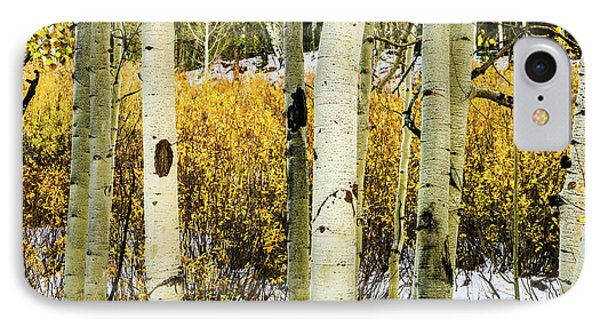 Quakies And Willows In Autumn IPhone Case by TL Mair
