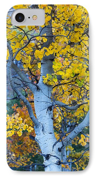 Quaking Aspen IPhone 7 Case