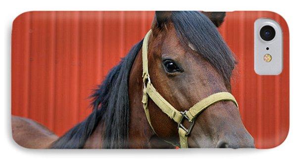 Quarter Horse Phone Case by Sandy Keeton