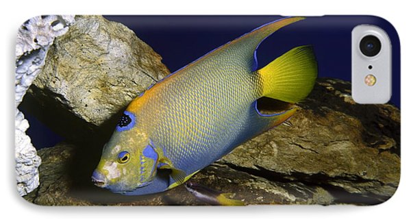 Queen Angelfish Phone Case by Sally Weigand