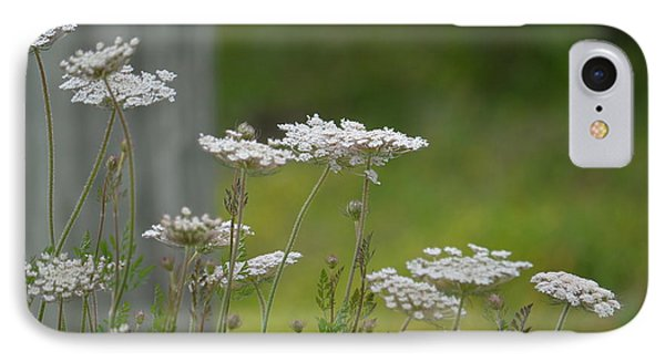 Queen Anne Lace Wildflowers IPhone Case by Maria Urso