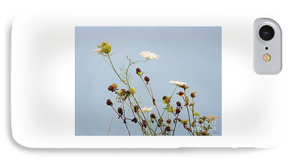 Queen Anne's Lace And Dried Clovers IPhone Case by Lise Winne