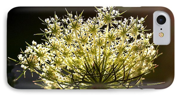 Queen Anne's Lace IPhone Case by Diane Merkle