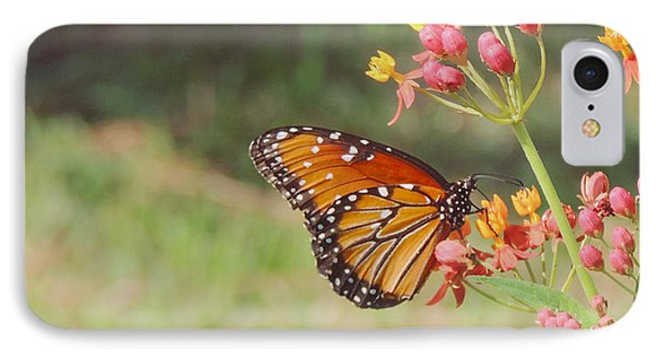 Queen Butterfly On Milkweed IPhone Case by Jayne Wilson
